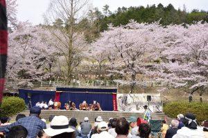 土師ダム桜